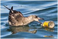 marine litter with bird
